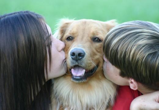 Hipoalergiczne karmy dla psów
