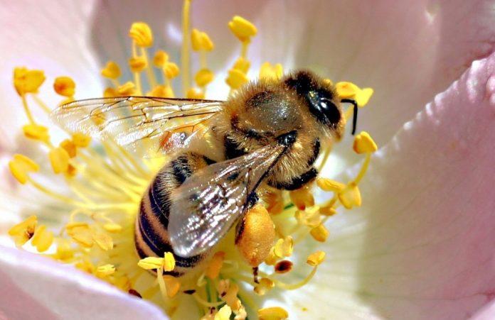 Uczulenie na jad pszczół