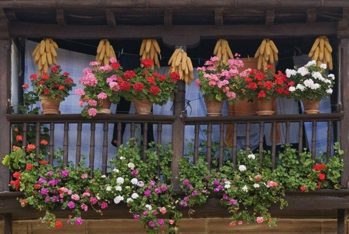Balkon dla alergika