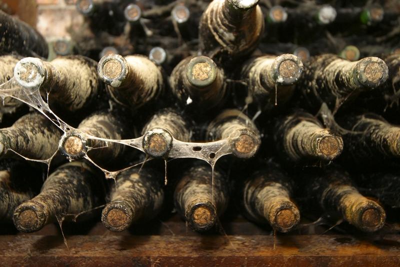 Alternaria - zarodniki i grzybnie