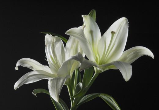 Kwiaty cięte – czyli co kupić na imieniny alergika