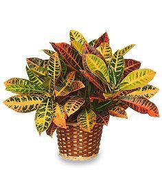 Alergenne rośliny w mieszkaniu