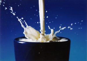 Mleko od krowy chroni niemowlęta przed alergią