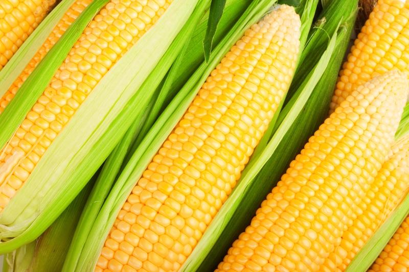 Kukurydza wśród alergenów