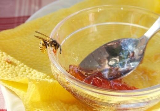 Jak unikać ukąszeń przez owady i późniejszych reakcji alergicznych?