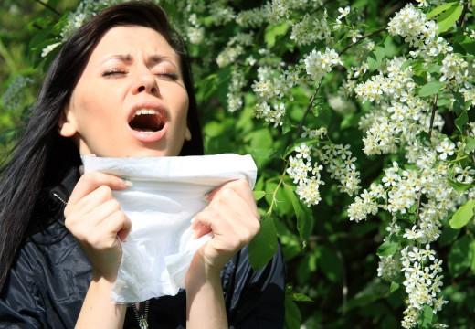 Zagrożenie alergią na pyłki także z dala od pylących roślin