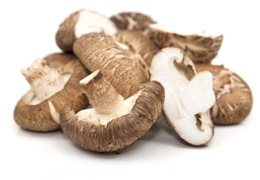 Mykoterapia – wszystko o leczeniu grzybami