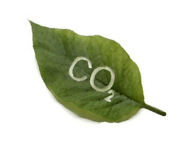 Dwutlenek węgla sprzymierzeńcem alergii