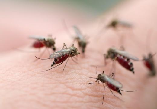 Co wpływa na alergię po użądleniu przez owady?