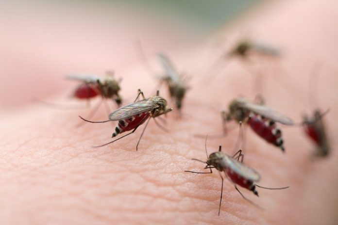 ugryzienia owadów