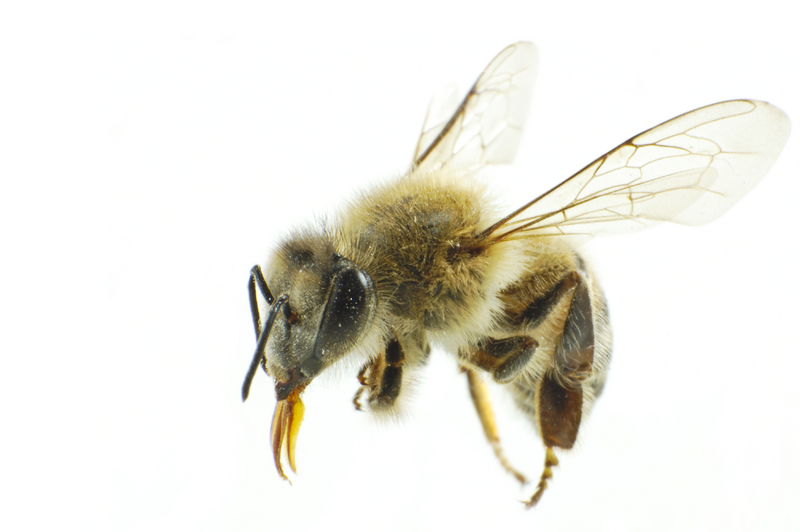 Odczulanie na jad owadów