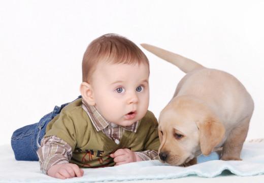 Jak dbać o psa, by ograniczyć alergeny w domu?
