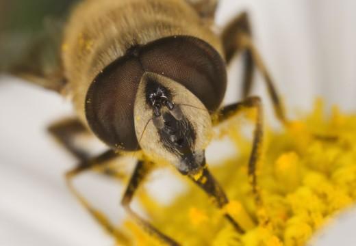 Wytyczne alergologów przy ukąszeniach przez owady