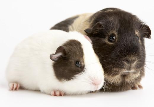 Hipoalergiczne i nie testowane na zwierzętach – czy to możliwe?