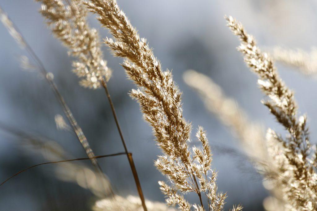 Zmiany klimatu a rozwój chorób alergicznych u schyłku lata