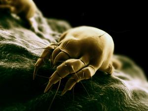 Na pohybel jesiennym infekcjom
