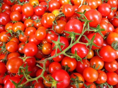 Alergia przez pomidory