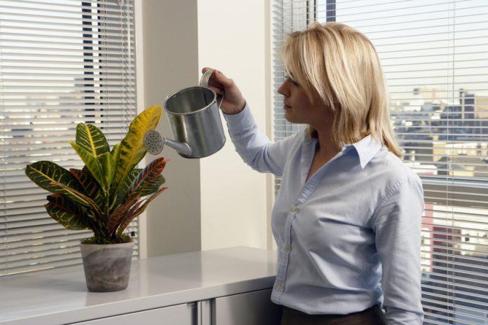 Zdrowe nawożenie roślin doniczkowych