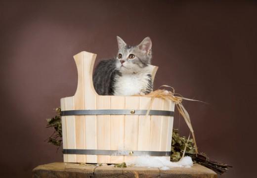 Czy warto kąpać kota?