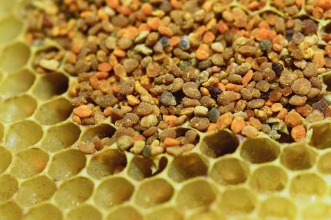 Pyłek kwiatowy - odpowiedź przyrody na alergie
