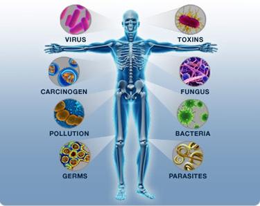 Podwójna rola białka w układzie odpornościowym