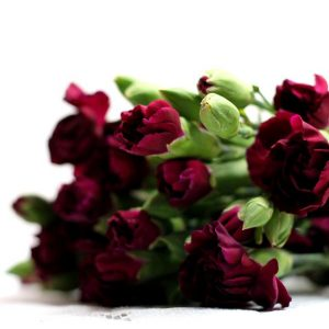 Jaki macie stosunek do ścietych kwiatów?