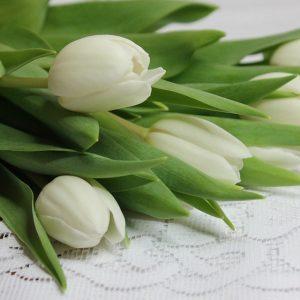 Tulipany to symbol wiosny. A wy jakie kwiaty najbardziej lubicie?:)