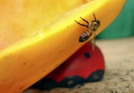 Uczulenie na pszczoły i osy
