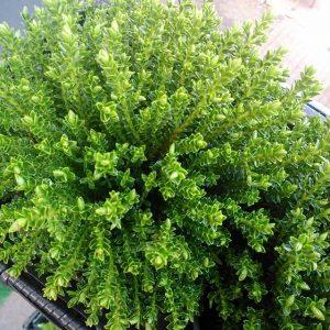 Wszechobecna zieleń skutecznie poprawia humor:) czyż wiosna nie jest najpiękniejsza…