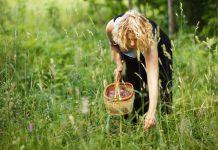 Alergia na kukurydzę - wziewna i pokarmowa