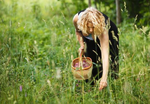 Alergia na kukurydzę – wziewna i pokarmowa