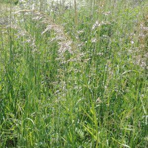 Czy znasz gatunki traw ktre uczulaj? Sprawd na wwwmojealergiepl trawyhellip