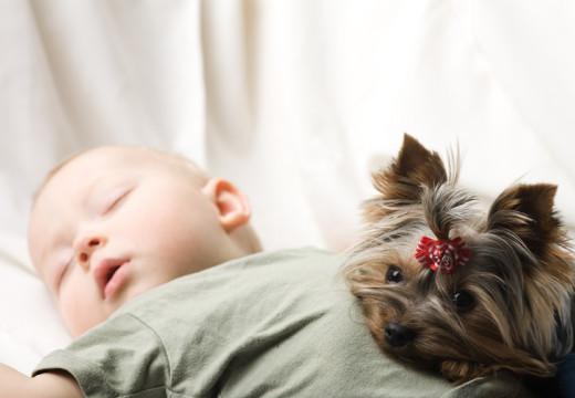 Zabawa ze zwierzętami chroni przed alergią?