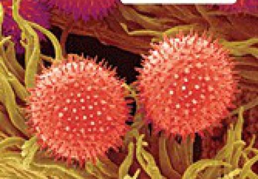 Leksykon alergicznych chorób skóry i reakcji polekowych