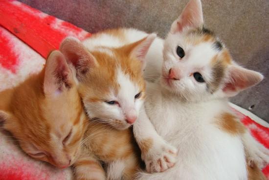 O czym powinien pamiętać alergik, decydując się na kota?