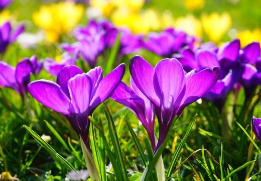 Jak urządzić ogród przyjazny alergikom?