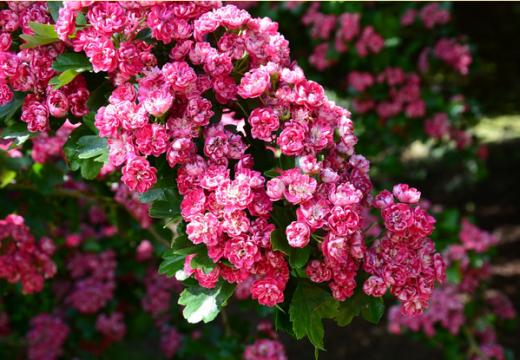 Jak urządzić ogród alergika?