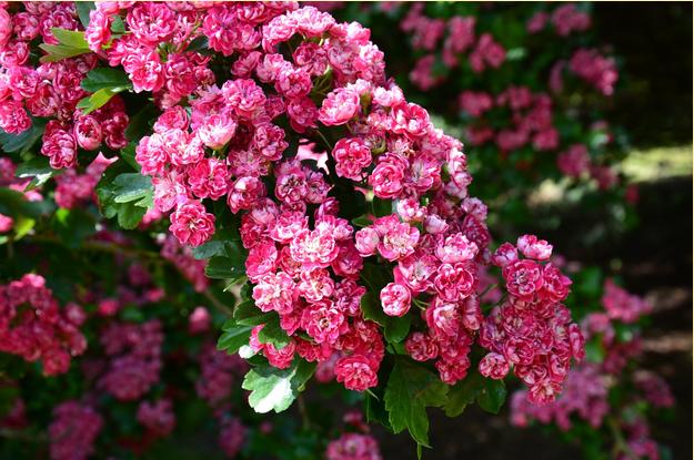 kwiaty-w-ogrodzie