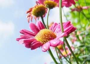 kwiaty-na-lace