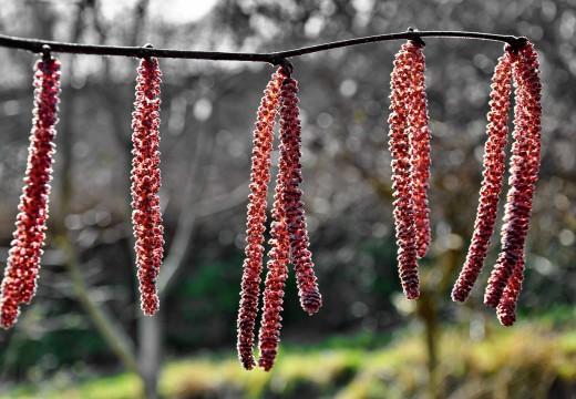 Leki i zioła, które pomogą ci złagodzić objawy alergii