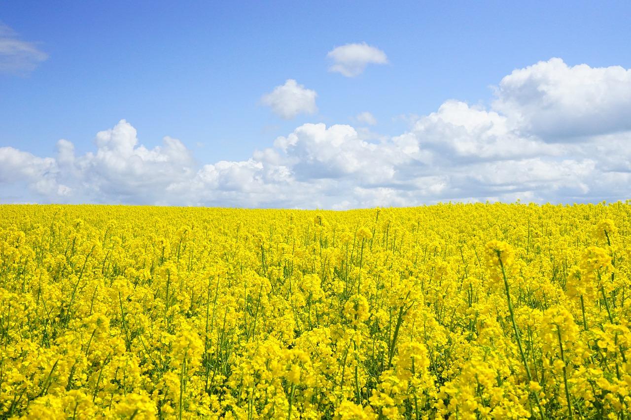 GMO-a-alergie