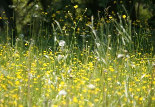 Jak przetrwać okres pylenia traw?