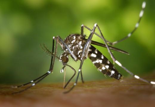 Pierwsza pomoc, gdy uczulają cię owady