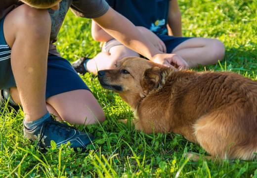 O czym powinien pamiętać alergik, odwiedzając krewnych mających psa?
