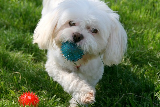 Jak wybrać psa dla małego alergika?