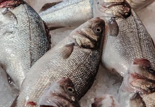 Alergia na ryby – co warto o niej wiedzieć?