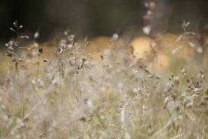 alergia-na-pylki-traw