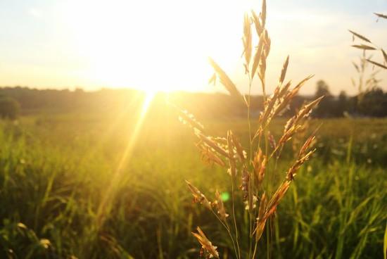 Alergie sezonowe – co uczula nas we wrześniu?