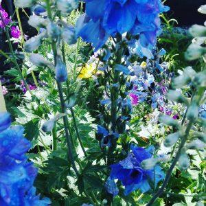 Lubicie letnie kwiaty? One te mog uczula wwwmojealergiepl kwiaty alergianaletniekwiatyhellip