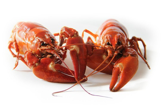 Alergia na owoce morza – fakty i mity